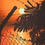 Fence Sunset, 2012, Acrylic on canvas, 91 x 122cm